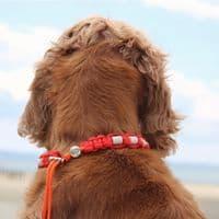 EM Dog Tick-Off Necklace - Red
